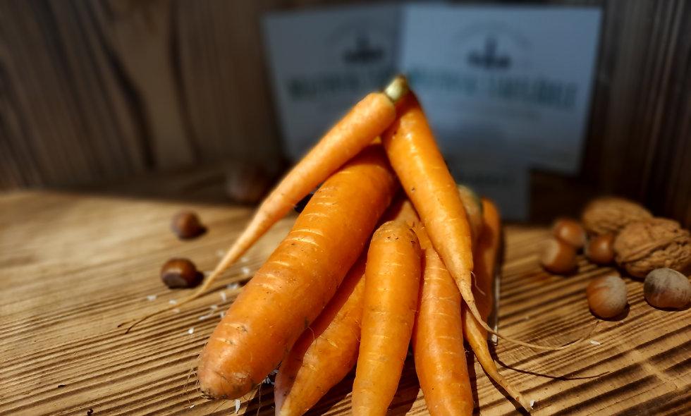 Karotten unsortiert