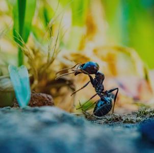 Pest Protection Plan