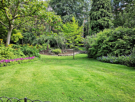 5 Ways to Make Your Lawn Look Great This Year