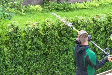 Hedge trimming, works in a garden. Profe