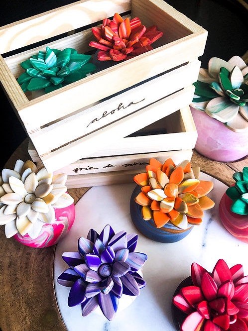 2 MARBLED ROSETTE SUCCULENTS IN WOODEN CRATE