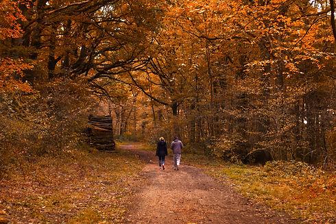 walking in woods.jpg