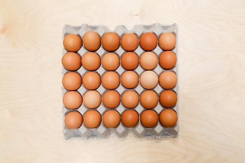 30 pastured free range eggs