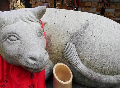 Sapi di Kuil Kitano Tenmangu