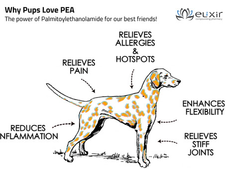 Why Pups love PEA (Palmitoylethanolamide)
