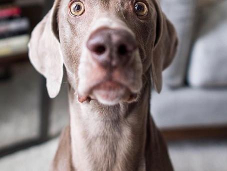 Anxious Doggy?