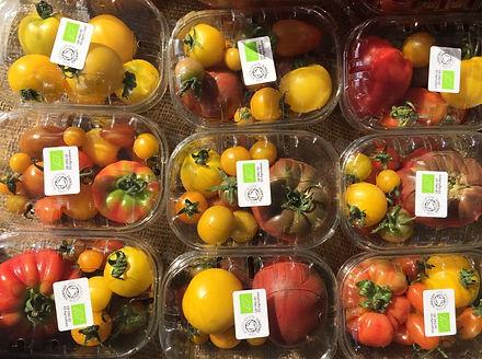 Blaencamel Organic Farm Tomatoes