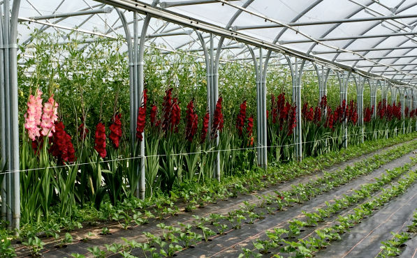 Blaencamel Organic Farm Bloomin Marvellous