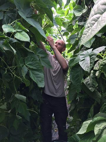 Tom Frost Blaencamel Organic Farm