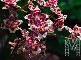Flower Photograph by Sammi