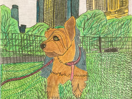 Dog walker's point of view By Charlotte R
