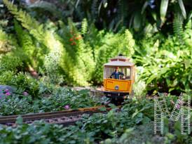 Little train photograph
