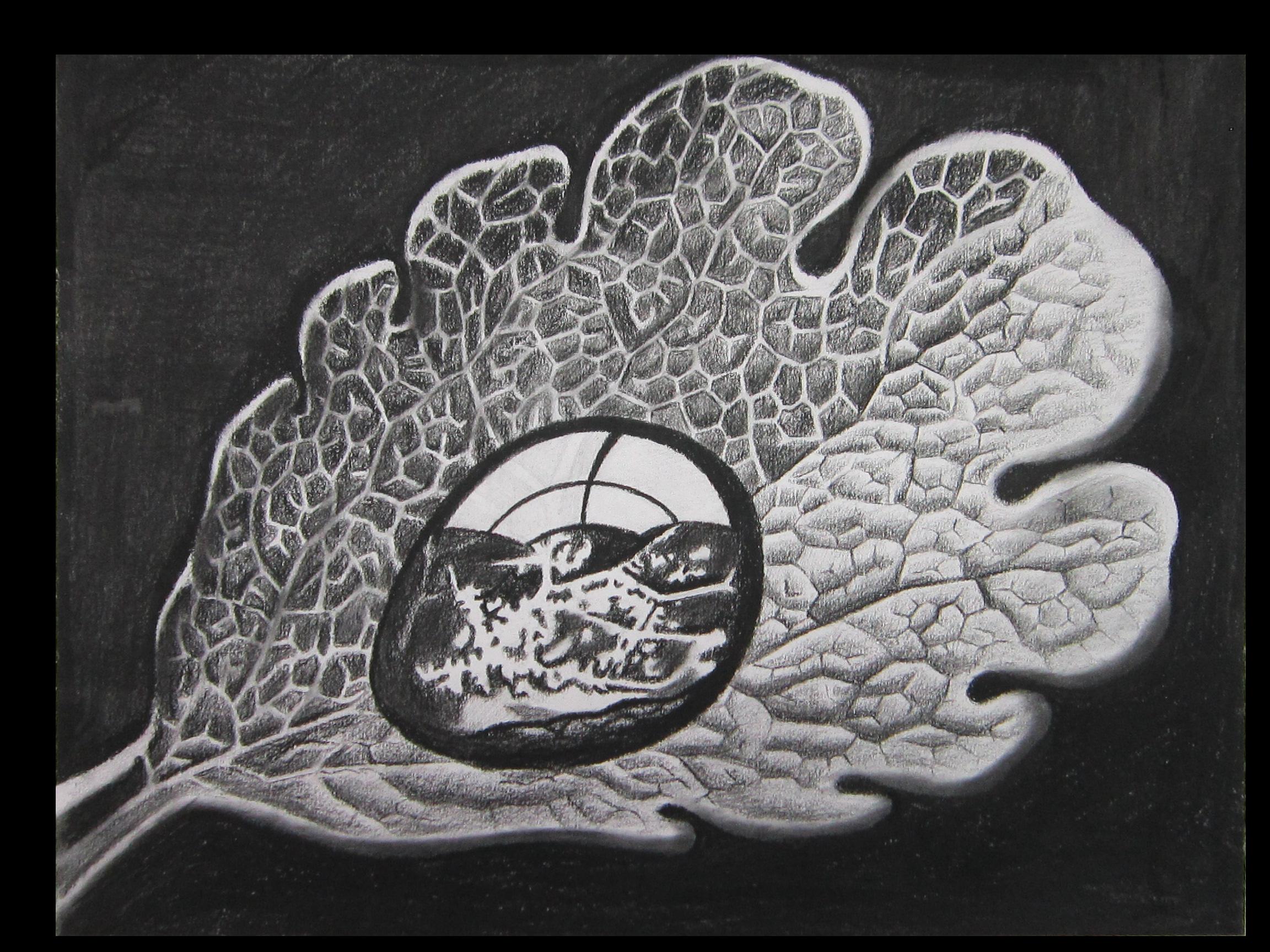 M.C. Escher Study