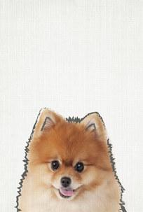 posters de animales, poster de Pomeranian