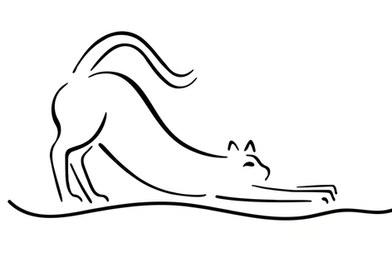 posters de animales, gato