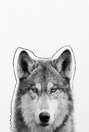 posters de animales, poster de perro husky