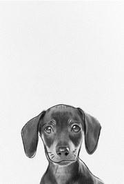 posters de animales, poster de perro