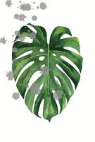 posters de plantas