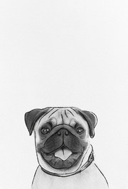 posters de animales,poster de perro pug