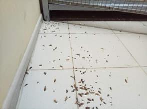 Уничтожение тараканов в вальерах