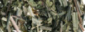 Lemongrass & Verbena loose blend banner