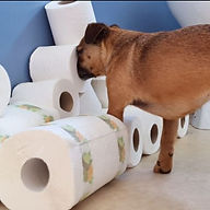 sky toilet roll.jpg