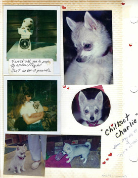 Chilkoot Charlie by Taylor&Willow 1989