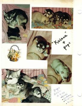 Kaiana and pups 1990