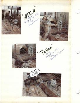 Atka by Bandit&China 1987. Teller by Bandit&Schoeni 1987