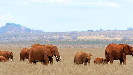 Elefant-Frage6.jpg
