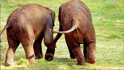 Elefant-Frage5.jpg