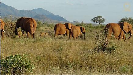 Elefant-Frage4.jpg