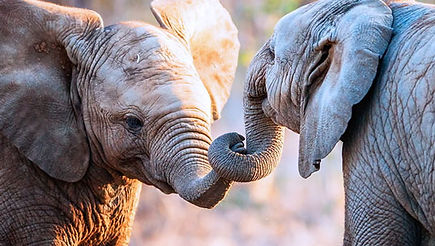 Elefante-8.jpg