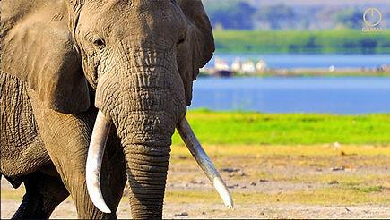 Elefanten10.jpg