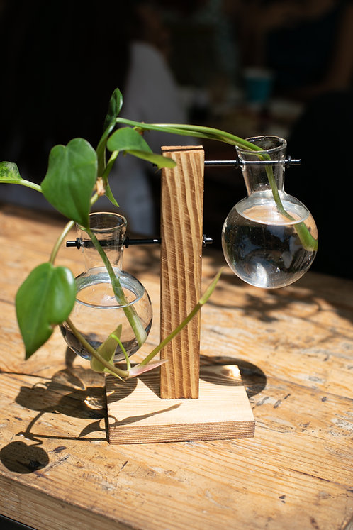 Hydroponic Plant Vase