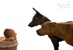 newborn and dogs