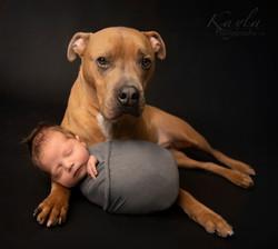 manotick newborn photographer