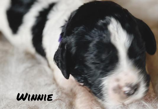 Winnie - Winnie's litter - April 2021