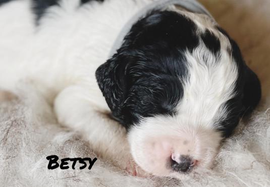 Besty - Winnie's litter - April 2021