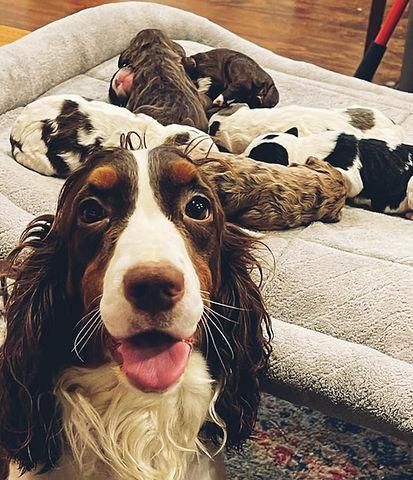 mama_puppies.jpg