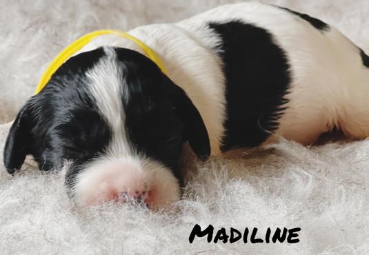 Madiline - Winnie's litter - April 2021