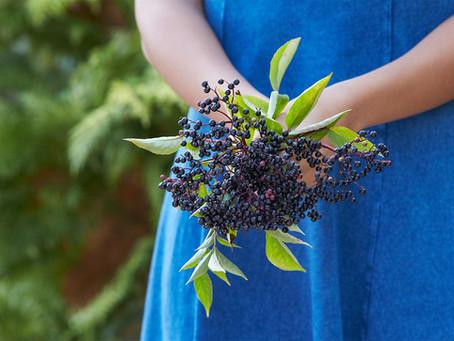 Elderberry Gummies: Nutritional Powerhouse of Protection