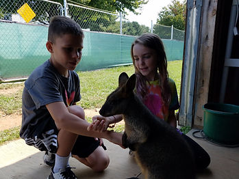 Two visitors feeding a swamp wallaby at Roos2u in Germantown, Maryland