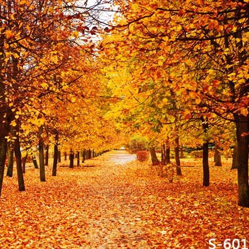 Fall backdrop.jpg