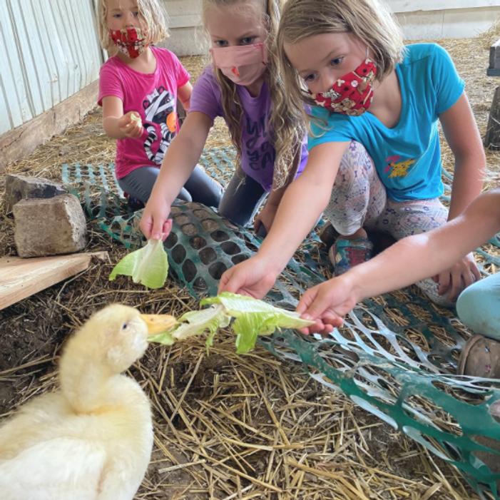 Summer Camp On The Farm