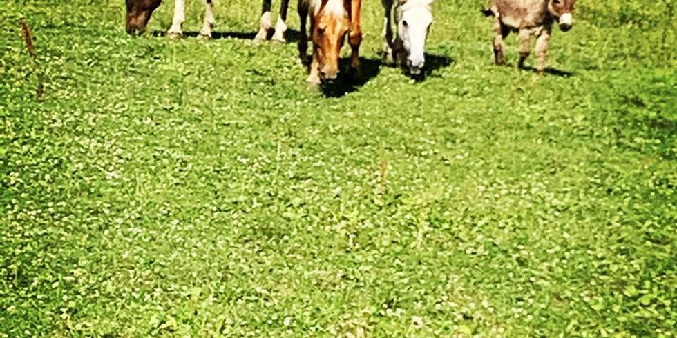 Private Farm Tour