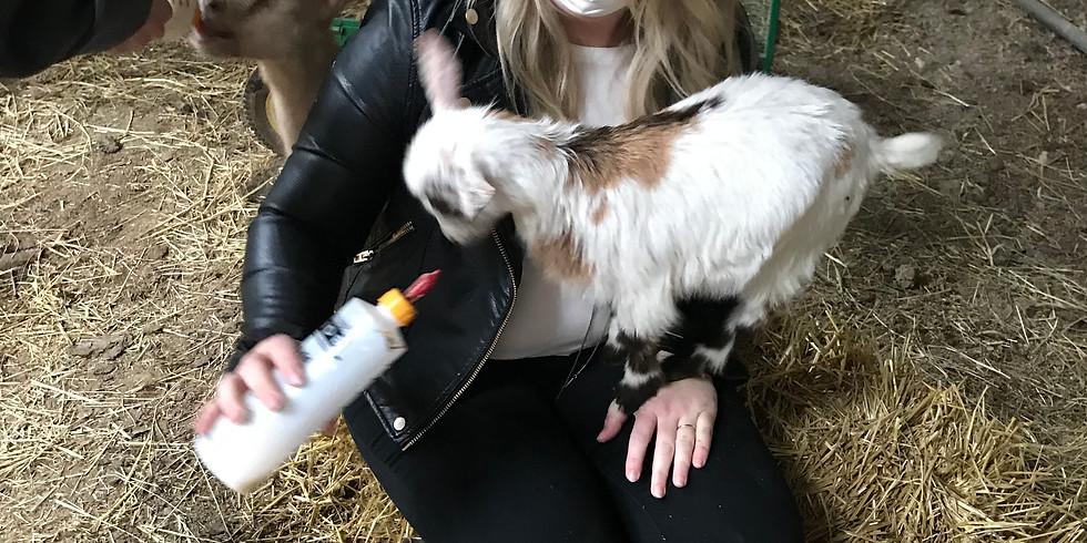 Bottle Feeding Baby Goats Experience