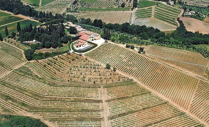 Foto aérea de viñedos
