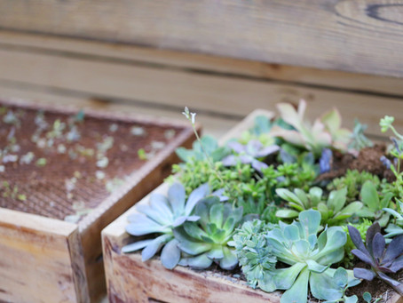 Become a Container Gardening Pro!