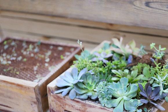 Succulent Terrarium Basics